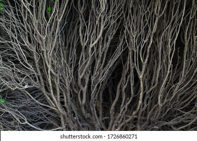 Branched root system of a bush in a park close-up, background