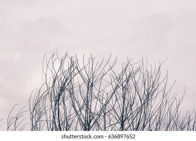 branches , abstract background