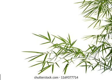 Branches of bamboo leaves on white
