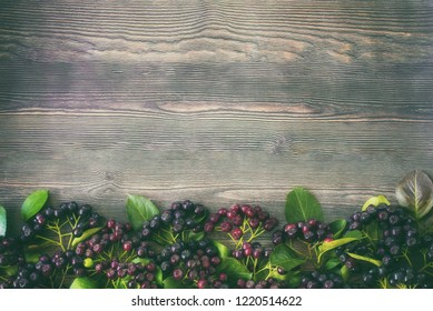 branches of black chokeberry on a wooden background top view.  chokeberry frame.
