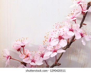 Branches of blossom Plums against a wooden board.