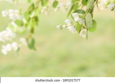 Branches of blossoming flowering plants on natural blurry background. Fresh green tree leaves of light outdoors sun on summer. Close-up, copy space, selective focus