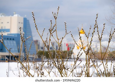 Branches of blossoming willow against the background of the church and city buildings. Palm Sunday symbol.