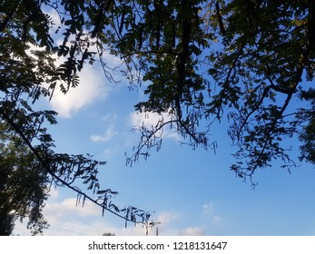 branches in blue sky