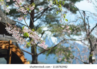 Branches of cherry blossom can be seen drooping across the photograph. Behind (and out of focus) is an old wooden waterwheel. Snow on a mountain can also be seen - this is Mt Fuji.