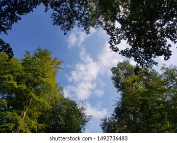 Branches and clouds in the shape of Africa