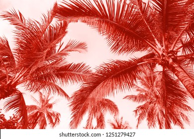 Branches of coconut palms under blue sky toned in living coral color. Pantone color of the year 2019 demonstration.