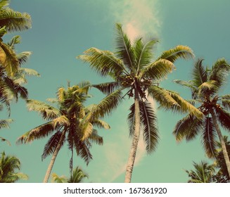 branches of coconut palms under blue sky - vintage retro style