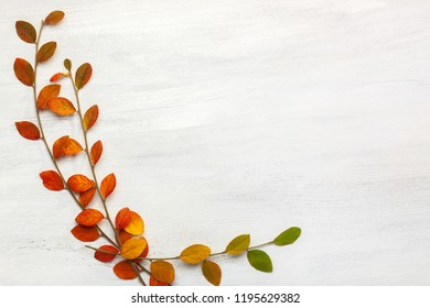 Branches with colorful autumn leaves on a white shabby wooden background. Flat lay.