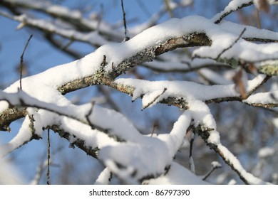 Branches covered by snow