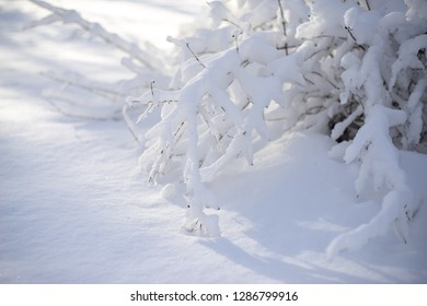 branches covered with heavy snow on blur background and sunflare