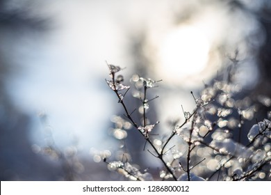 branches covered with snow and ice on blur background and sunflare