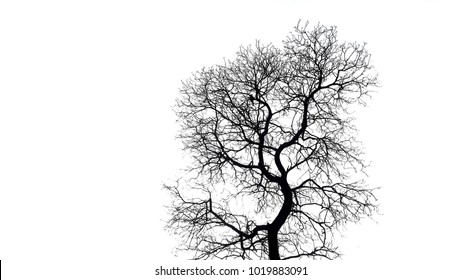 The branches of The branches of dead tree isolated on white background tree /dry tree  isolated on white background