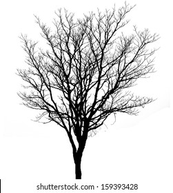 branches of dead tree silhouette on white background