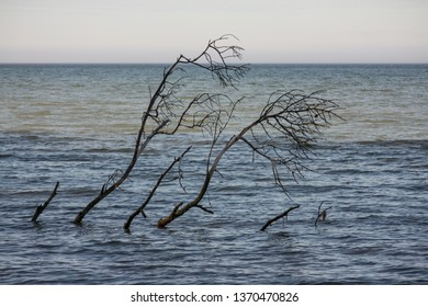Branches from a dead tree sticking out of the water.  Lexington Park, MD, USA.