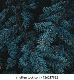 the branches of fir