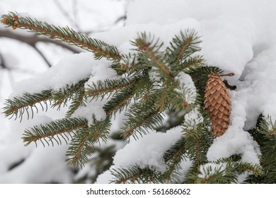 Branches of a fir tree with cone piled high with snow - close-up