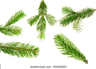 Branches of fir tree isolated on white background