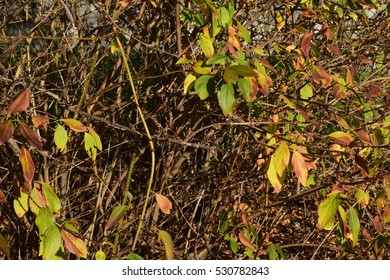 Branches with foliage