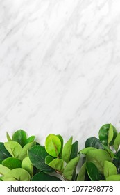 Branches with green ficus leaves on marble background, with copy space on top.
