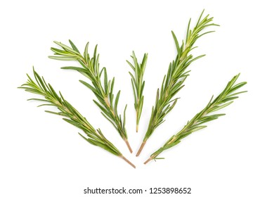 Branches of green rosemary isolated on white. Fragnant herb seasoning.