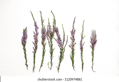 Branches of heather with violet flowers on a light background