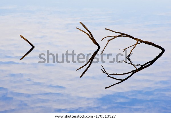 Branches in the Lake with Sky and Clouds Reflection