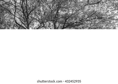 Branches with leaves in black and white
