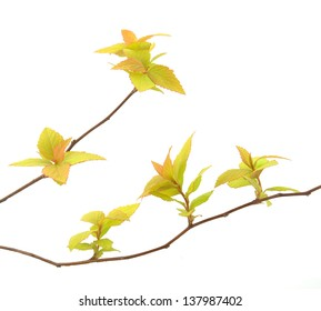 Branches and leaves on a white background