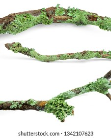branches moss Isolated on white background