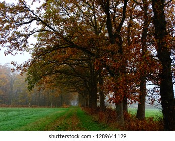 Branches of oak in autumn colors (deeper shadow)