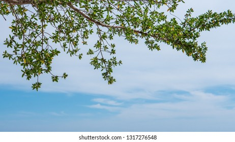 The branches on the beach, the background is the sky.