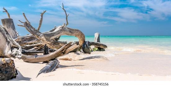 Branches on the beach of Cayo Jutias in the Pinar del Rio region in Cuba.