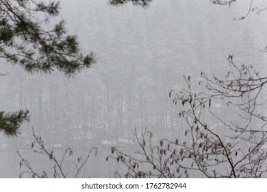 Branches on a foggy lake. Natural background.