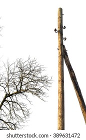 branches on pole