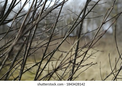 Branches on tree outside winter