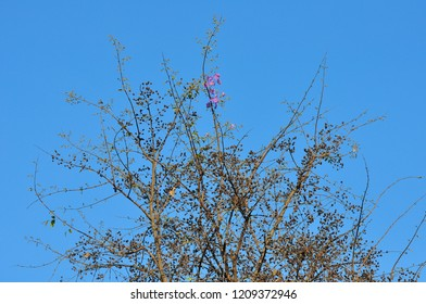 Branches on the treetop on the blue sky