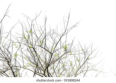 Branches on white background.