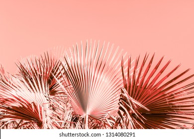 Branches of palm tree under the sunlight sky toned in living coral color of the year 2019