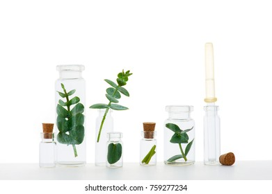Branches of plants in the medicine bottles on the white background