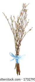 Branches of the pussy willow with blue ribbon on white background.