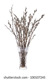Branches of the pussy willow with flowering bud in vase with water isolated on white background