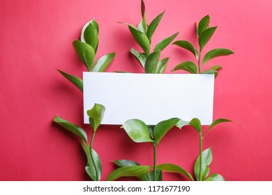 Branches of Ruscus and blank card on color background