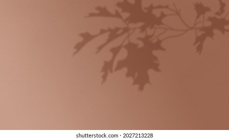 Branches Shadow Overlay Effect Autumn Background - Shutterstock ID 2027213228