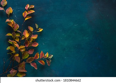 Branches with small colorful autumn leaves (Spiraea Vanhouttei) on dark blue-green painted wooden background  with empty space for text or image. Flat lay.
