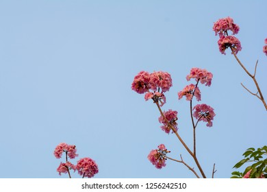 Branches with small pink flowers on a background sky .