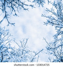 The branches of the snow
