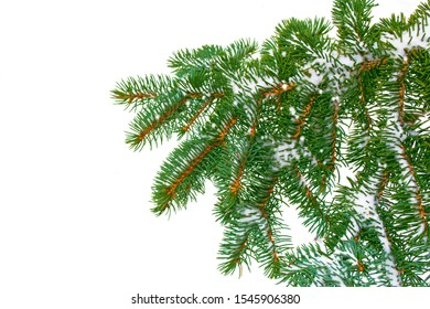 The branches of the snow covered Christmas tree on a white background. nature