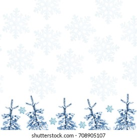 The branches of the snow covered Christmas tree on a white background.