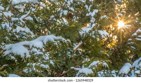 Branches with snow and a sunset in the background